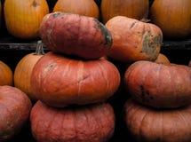 Oranje pompoenen in een stapel Royalty-vrije Stock Afbeelding
