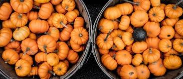 Oranje pompoenen in manden Stock Fotografie