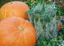 Oranje pompoenen met bloemen op een groene achtergrond stock foto's