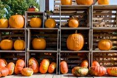 Oranje pompoenen voor verkoop op een markt royalty-vrije stock foto's