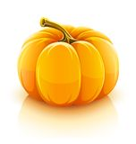 Oranje pompoengroente Royalty-vrije Stock Afbeelding