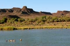 Oranje rivier Stock Foto's