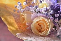 Oranje Rose Common-baby` s-adem royalty-vrije stock fotografie