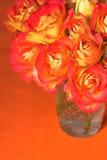 Oranje Rozen Royalty-vrije Stock Fotografie
