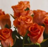 Oranje Rozen stock afbeeldingen