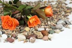 Kiezelstenen en rozen royalty-vrije stock afbeeldingen