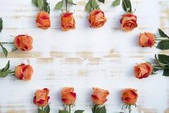 Oranje rozen op witte rustieke houten achtergrond Royalty-vrije Stock Afbeelding