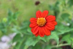 Oranje Schoonheid royalty-vrije stock afbeeldingen