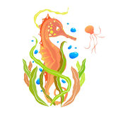 Oranje Seahorse royalty-vrije stock afbeelding