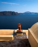Oranje Sfinx van Oia Dorp, Santorini, Griekenland Stock Afbeelding