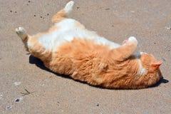 Oranje Tabby Cat op Rug Stock Foto's