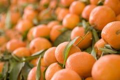 Oranje Tribune stock afbeelding