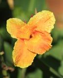 Oranje tropische bloem Stock Fotografie
