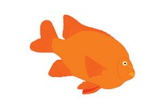 Oranje Tropische Vissen Royalty-vrije Stock Afbeeldingen