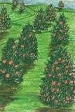 Oranje tuin Stock Fotografie