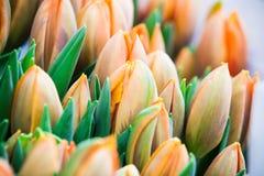 Oranje tulpen in Amsterdam Stock Fotografie