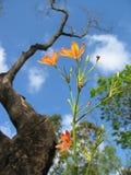 Oranje uiterst kleine bloemen Stock Foto's
