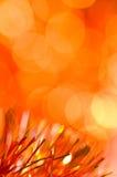 Oranje vakantieachtergrond Royalty-vrije Stock Afbeelding