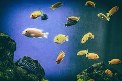 Oranje vissen onder water, overzeese scène, analoge filter stock fotografie