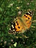 Oranje vlinder Royalty-vrije Stock Fotografie