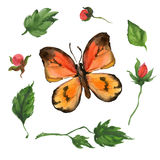 Oranje vlinder en bloemen Royalty-vrije Stock Afbeelding