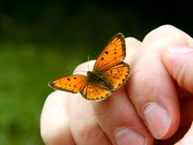 Oranje vlinder op menselijke hand Stock Foto's