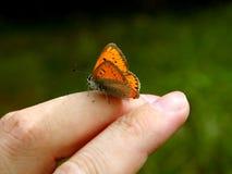 Oranje vlinder op menselijke hand Royalty-vrije Stock Foto