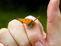 Oranje vlinder op menselijke hand Royalty-vrije Stock Foto's