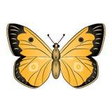 Oranje vlinder vectordieillustratie op witte backgrou wordt geïsoleerd Stock Foto