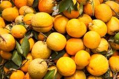 Oranje vuile ongewassen Stock Afbeelding