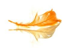 Oranje weerspiegelde veer stock afbeeldingen