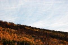 Oranje wild gras op Lijstberg Zuid-Afrika stock afbeelding