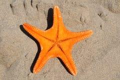 Oranje zeester Stock Fotografie