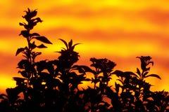 Oranje Zonsondergang stock afbeelding