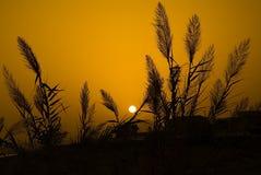 Oranje zonsondergang en zwarte installaties Royalty-vrije Stock Foto