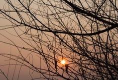 Oranje zonsondergang met gouden zon Stock Afbeeldingen