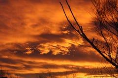 Oranje zonsondergang met naakte boom stock afbeeldingen