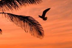 Oranje zonsondergang met palm Stock Afbeeldingen