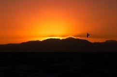 Oranje zonsopgang met vogel Stock Foto