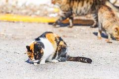 Oranje, zwart-witte kat royalty-vrije stock fotografie