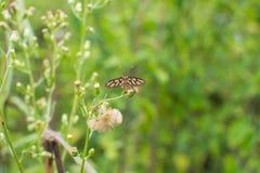 Oranje-zwarte vlinder royalty-vrije stock foto