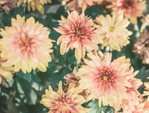 Oranjegele Bloemenachtergrond stock foto