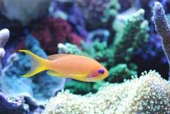 Oranjegele purple royalty-vrije stock fotografie