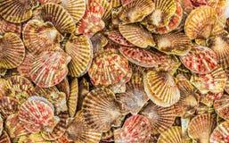 Oranjerode shells in een hoop royalty-vrije stock fotografie