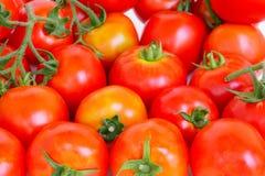 Oranjerode tomaten Stock Fotografie