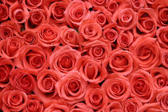 Oraqnge roses packed side by side Stock Images