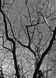 Orario invernale Fotografia Stock Libera da Diritti