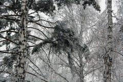Orario invernale Fotografie Stock