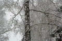 Orario invernale Fotografie Stock Libere da Diritti