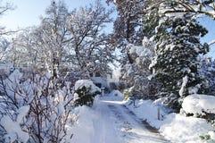 Orario invernale con gli alberi e la neve Fotografia Stock